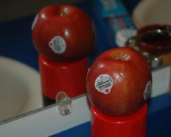 Three label apple